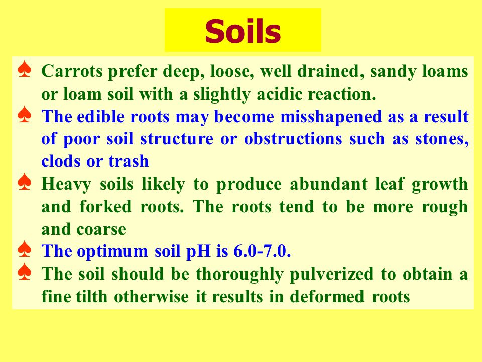 Soils Carrots prefer deep, loose, well drained, sandy loams or loam soil with a slightly acidic reaction.