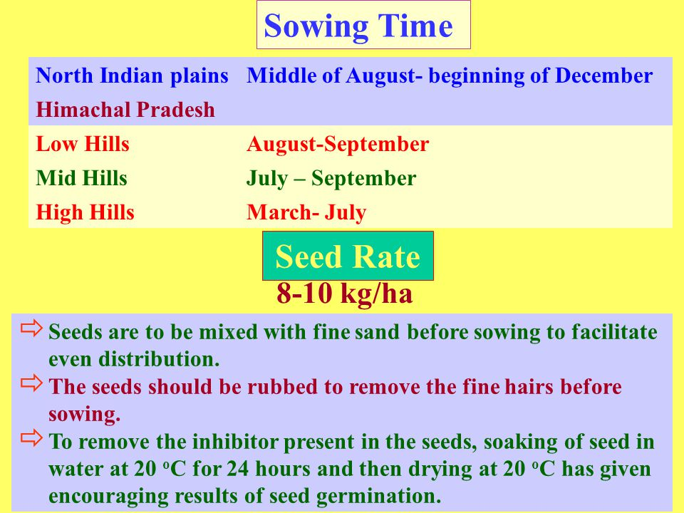 Sowing Time Seed Rate 8-10 kg/ha North Indian plains