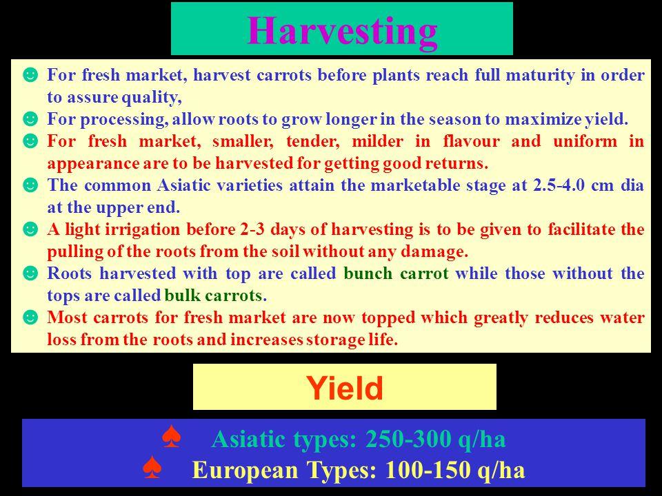 Harvesting Yield Asiatic types: 250-300 q/ha