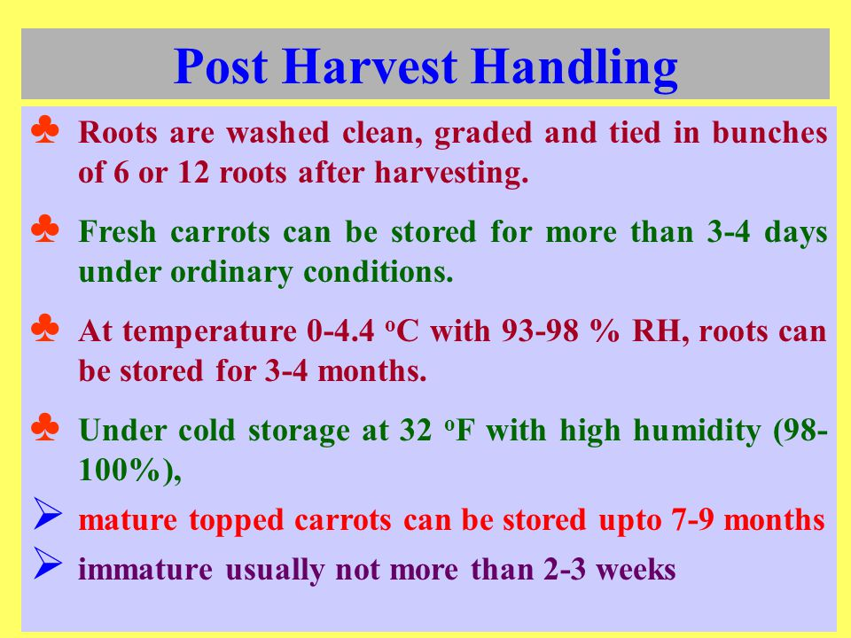 Post Harvest Handling Roots are washed clean, graded and tied in bunches of 6 or 12 roots after harvesting.
