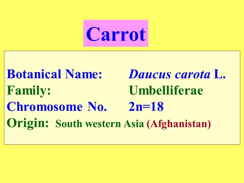 Carrot Botanical Name: Daucus carota L.