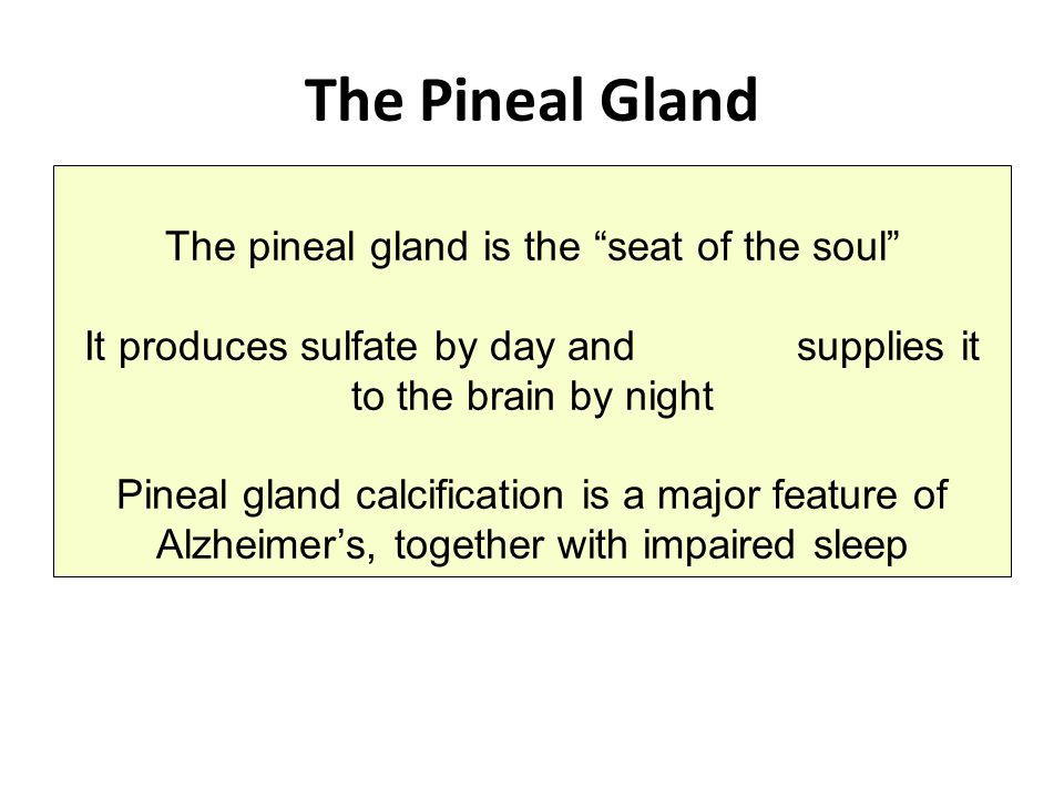 The Pineal Gland The pineal gland is the seat of the soul
