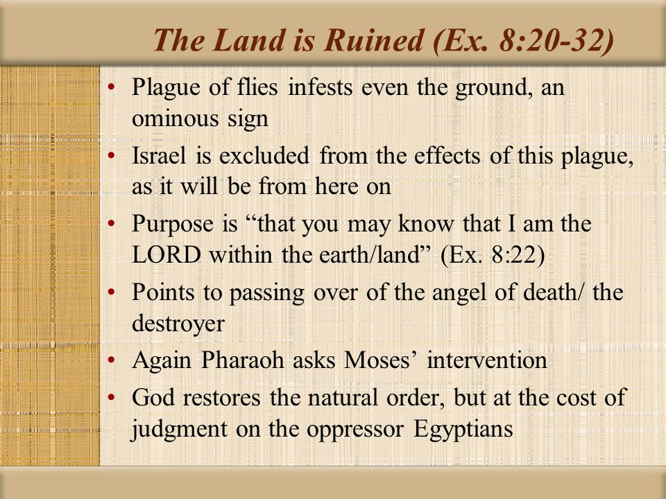 The Land is Ruined (Ex. 8:20-32)