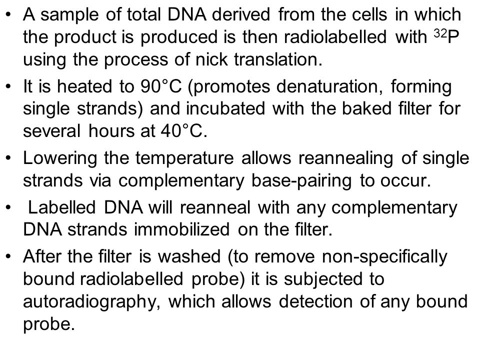 A sample of total DNA derived from the cells in which the product is produced is then radiolabelled with 32P using the process of nick translation.
