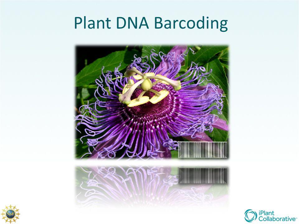 Plant DNA Barcoding