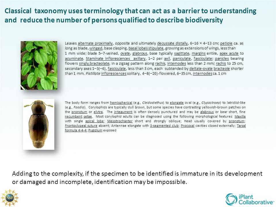 and reduce the number of persons qualified to describe biodiversity