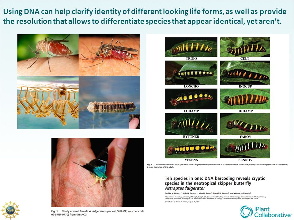Using DNA can help clarify identity of different looking life forms, as well as provide