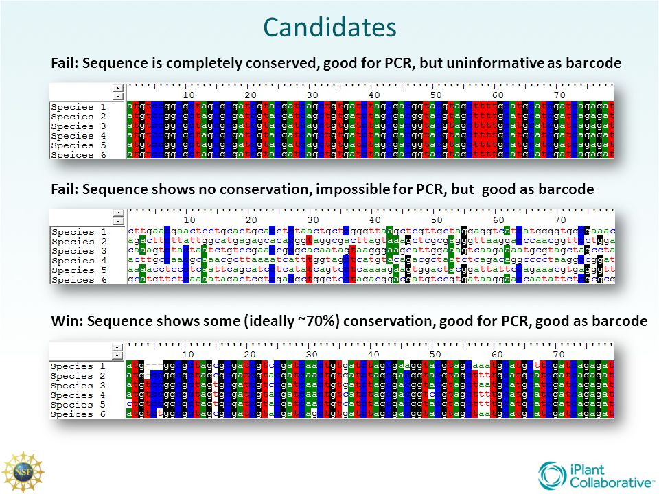 Candidates Fail: Sequence is completely conserved, good for PCR, but uninformative as barcode.