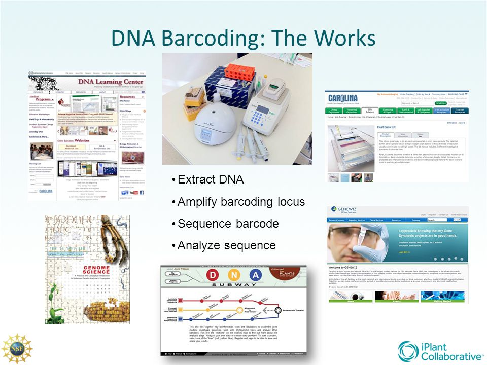 DNA Barcoding: The Works