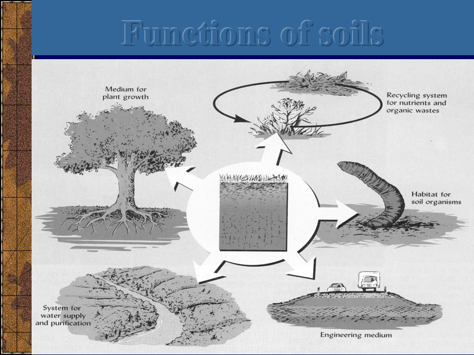 Functions of soils