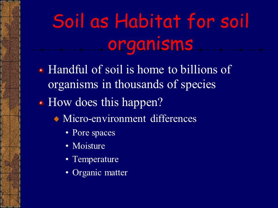 Soil as Habitat for soil organisms