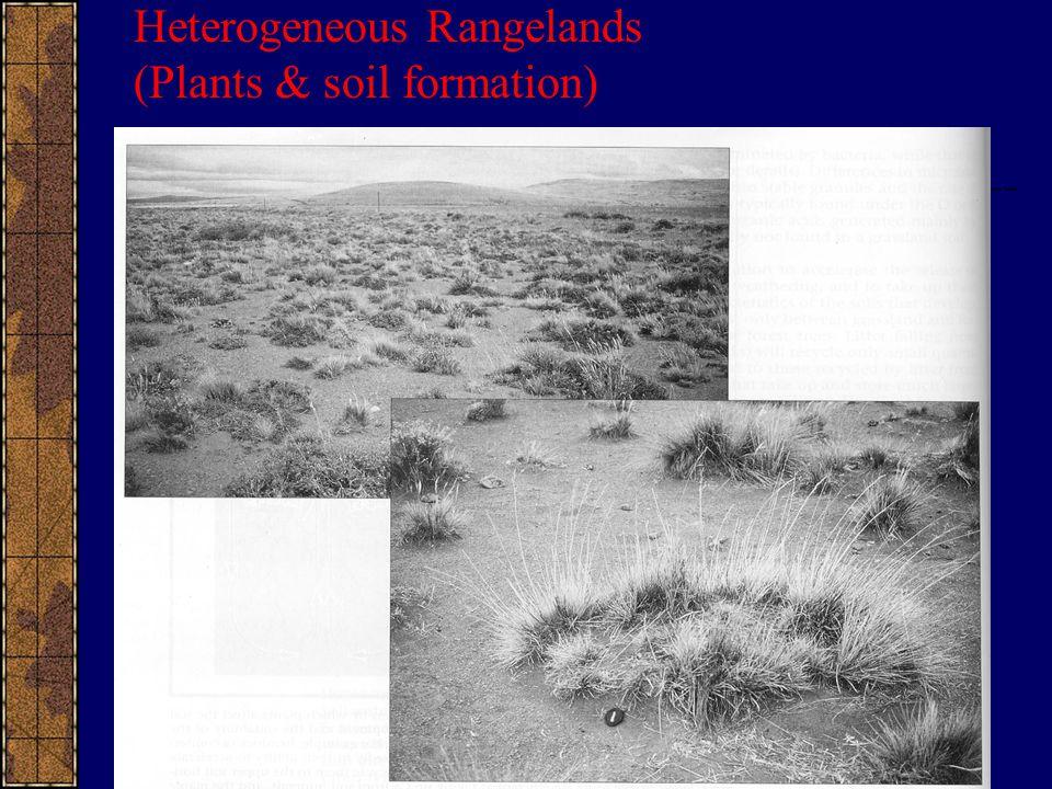 Heterogeneous Rangelands (Plants & soil formation)