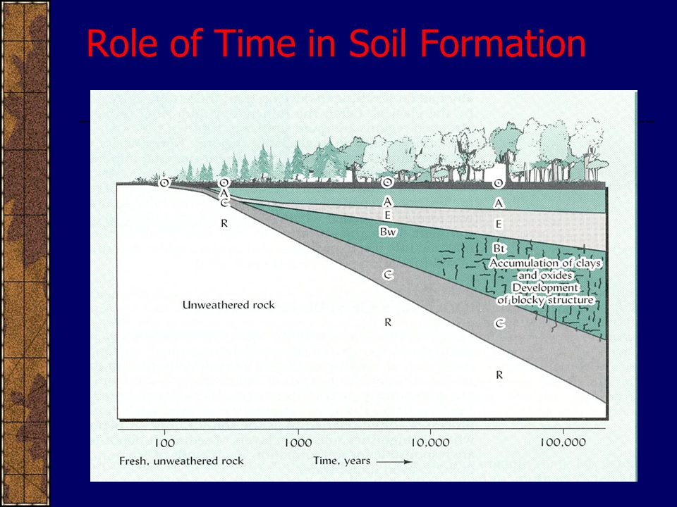 Role of Time in Soil Formation
