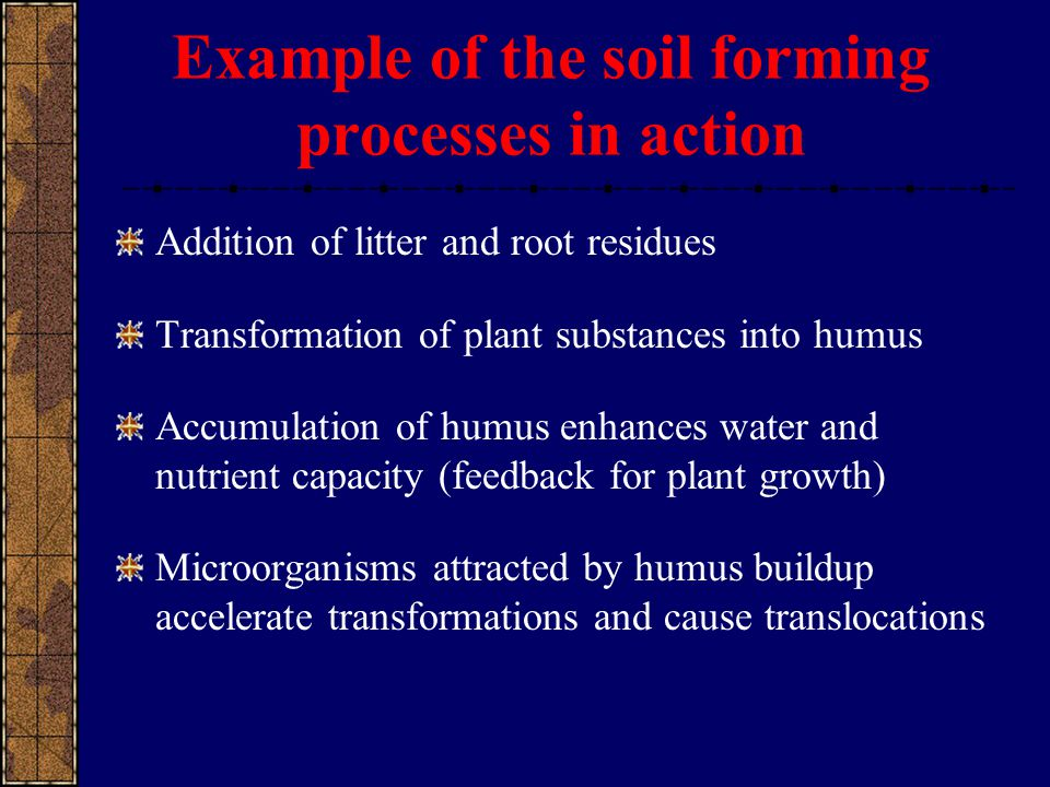 Example of the soil forming processes in action