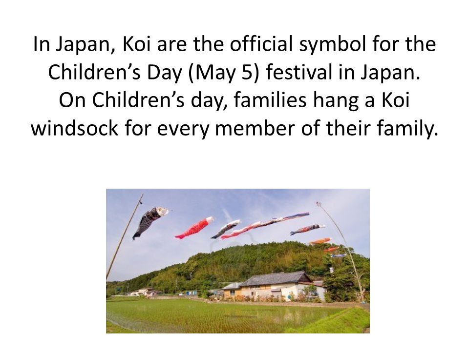 In Japan, Koi are the official symbol for the Children's Day (May 5) festival in Japan.
