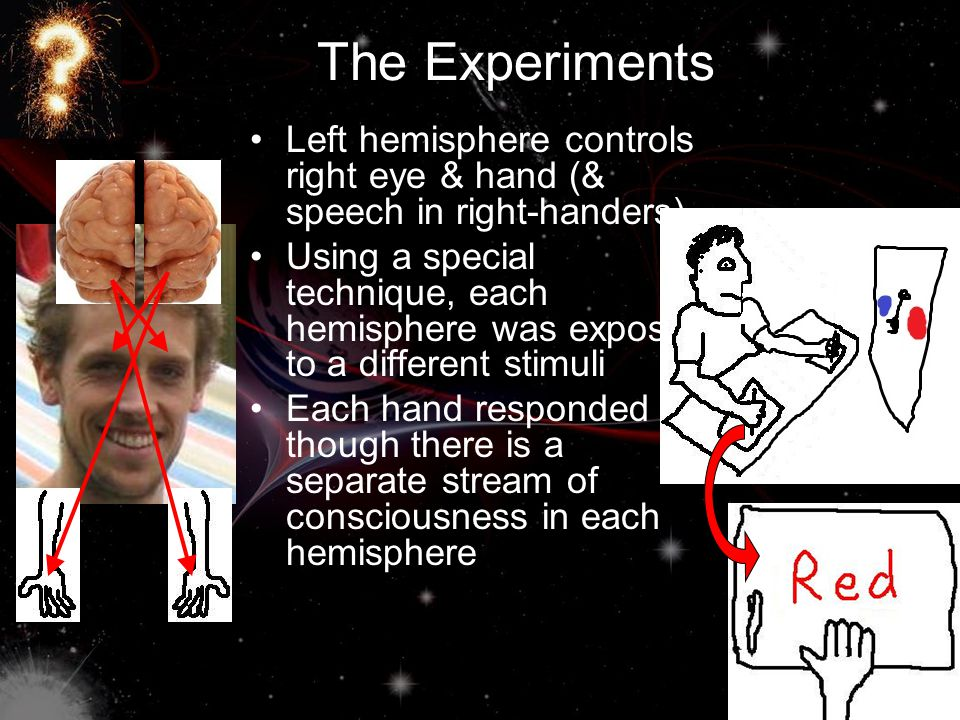 The Experiments Left hemisphere controls right eye & hand (& speech in right-handers)