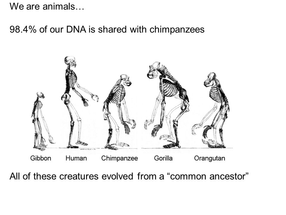We are animals… 98.4% of our DNA is shared with chimpanzees.