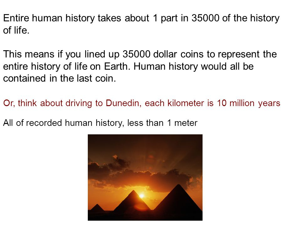 Entire human history takes about 1 part in 35000 of the history of life.