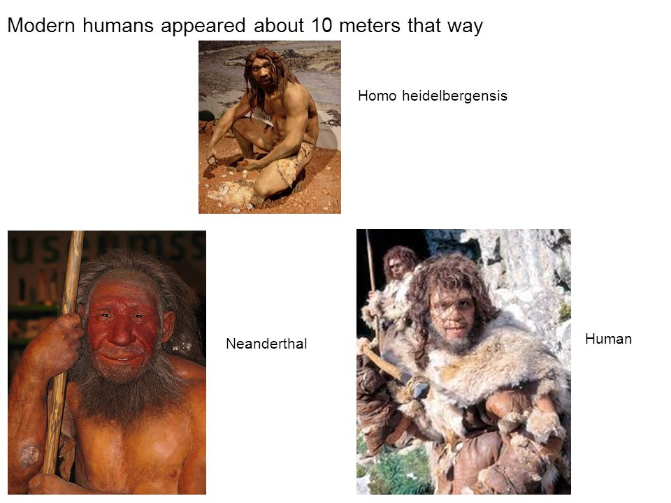 Modern humans appeared about 10 meters that way