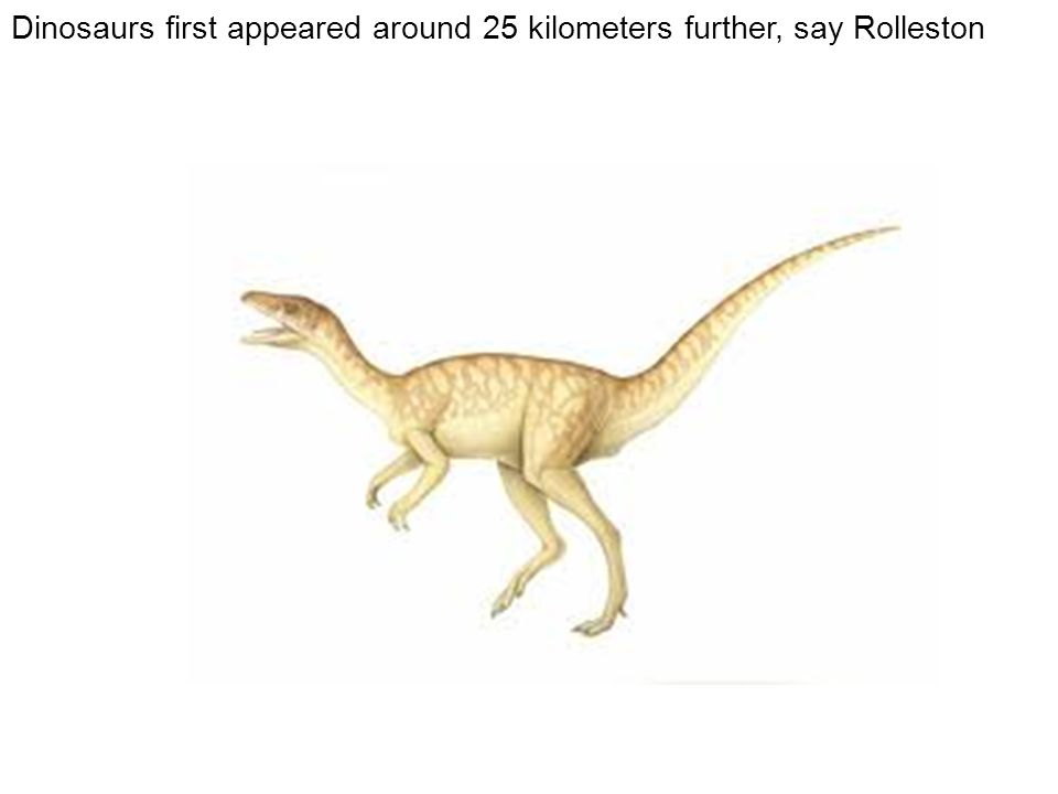 Dinosaurs first appeared around 25 kilometers further, say Rolleston