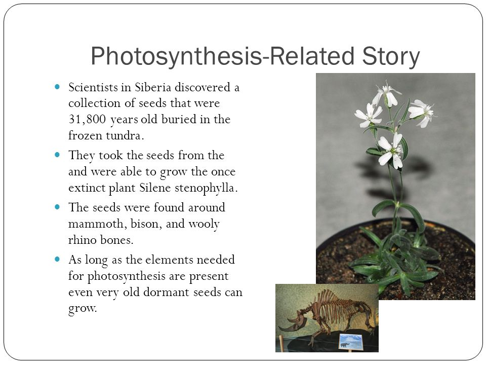 Photosynthesis-Related Story