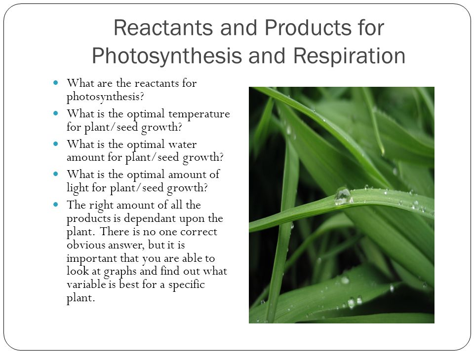 Reactants and Products for Photosynthesis and Respiration
