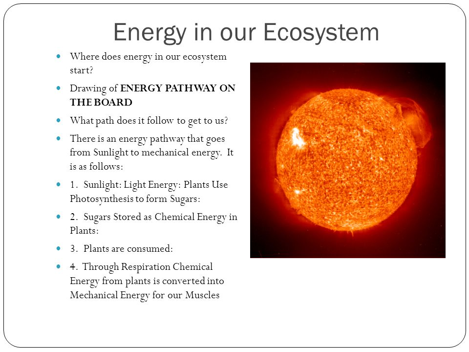 Energy in our Ecosystem