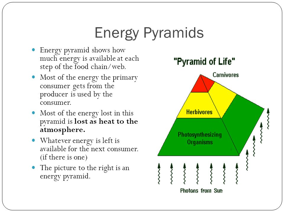 Energy Pyramids Energy pyramid shows how much energy is available at each step of the food chain/web.