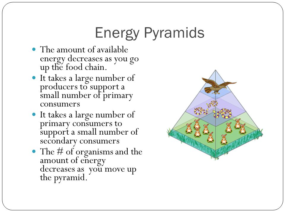 Energy Pyramids The amount of available energy decreases as you go up the food chain.