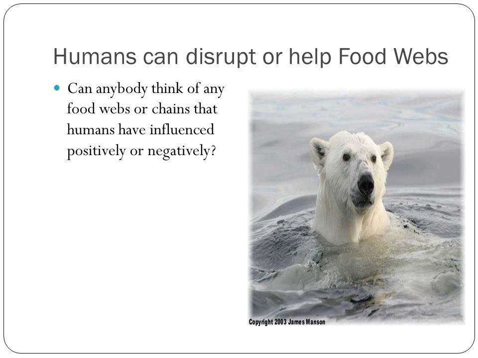 Humans can disrupt or help Food Webs