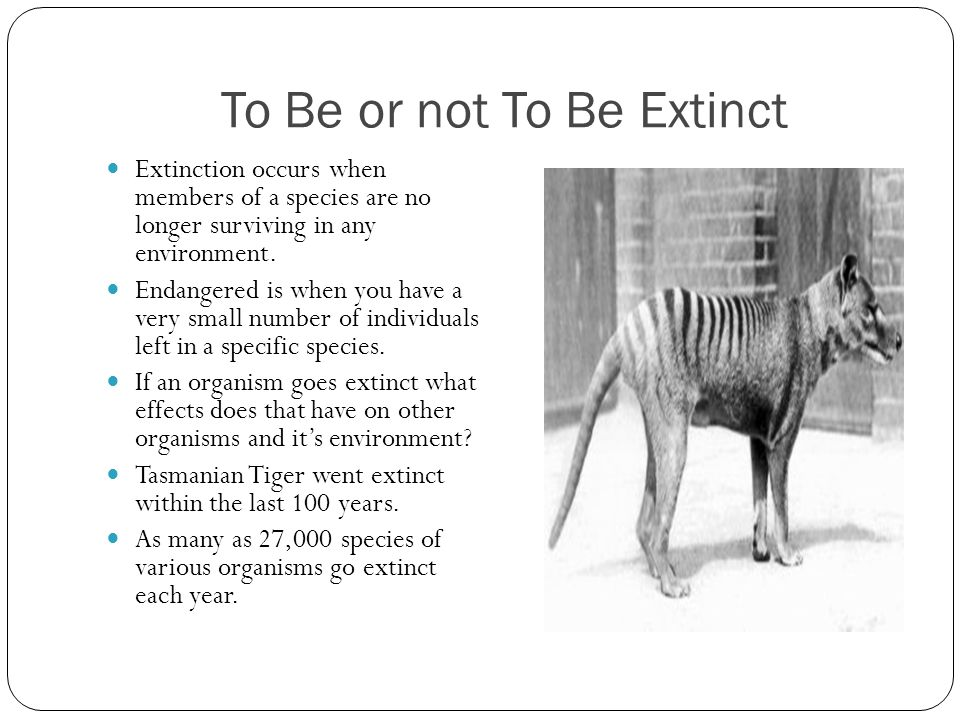 To Be or not To Be Extinct