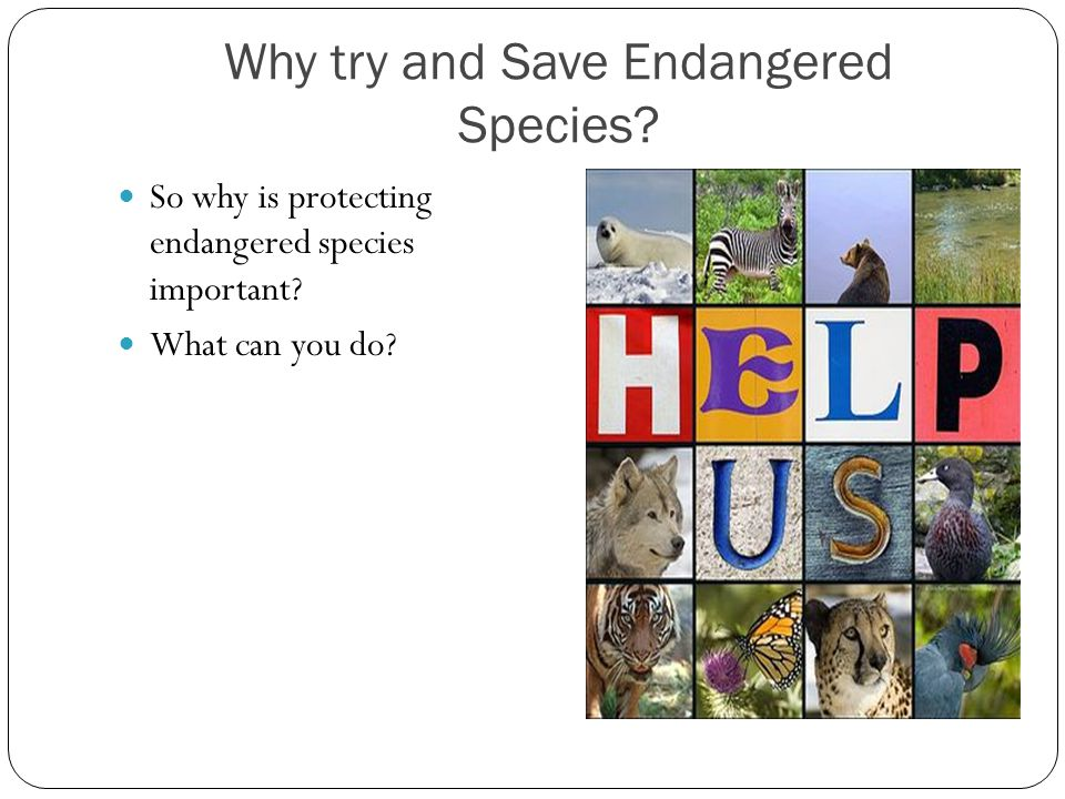 Why try and Save Endangered Species