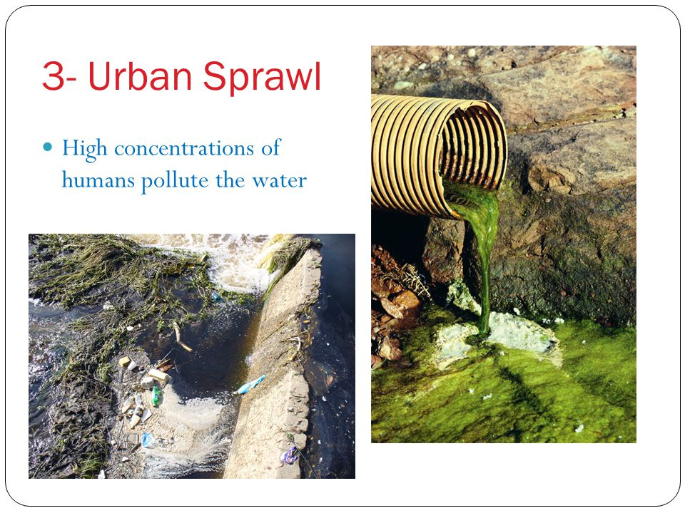 3- Urban Sprawl High concentrations of humans pollute the water