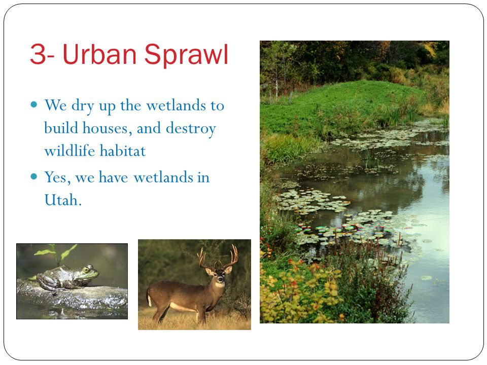 3- Urban Sprawl We dry up the wetlands to build houses, and destroy wildlife habitat.