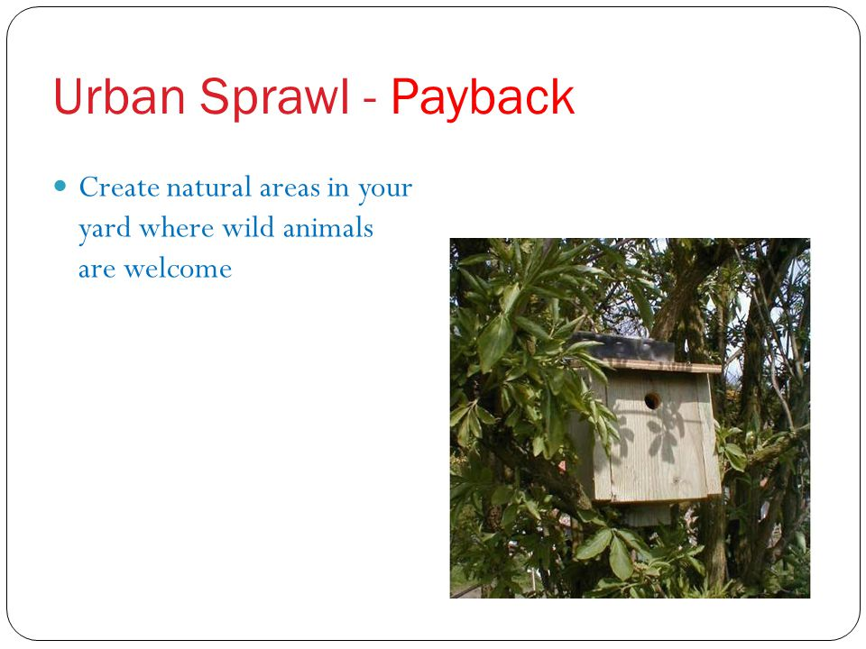 Urban Sprawl - Payback Create natural areas in your yard where wild animals are welcome