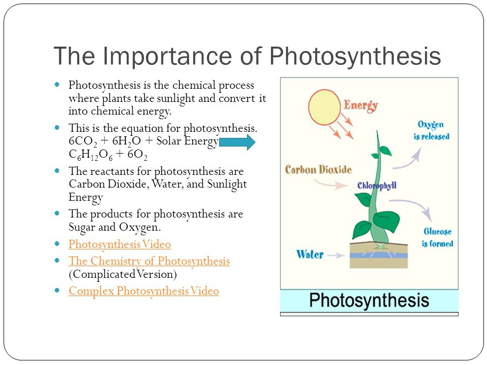 importance of photsynthesis Photosynthesis is the ultimate source of the energy for all the food that humans require, as well as the source of the energy used to build the biological materials.