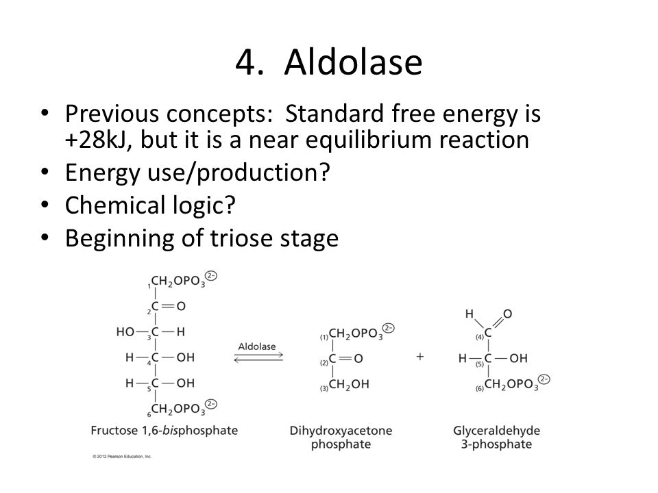 4. Aldolase Previous concepts: Standard free energy is +28kJ, but it is a near equilibrium reaction.