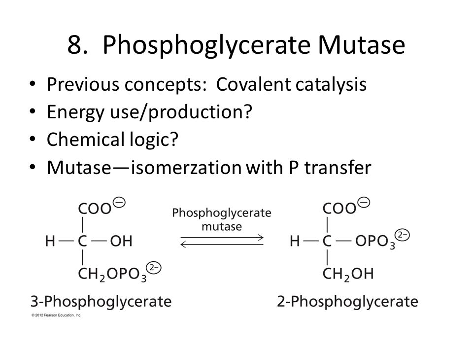 8. Phosphoglycerate Mutase