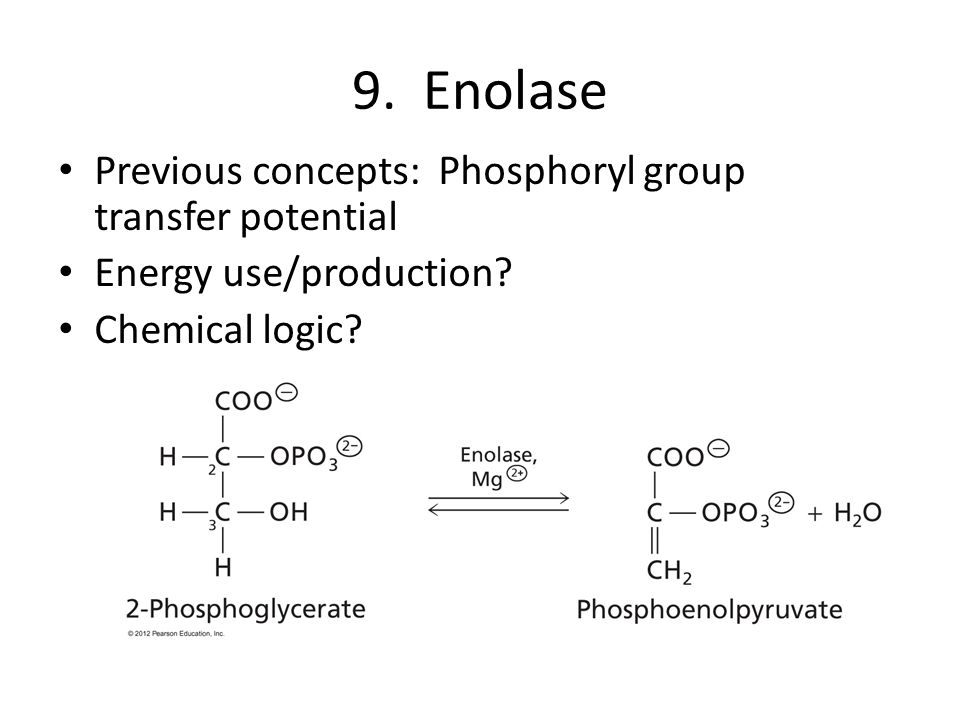 9. Enolase Previous concepts: Phosphoryl group transfer potential