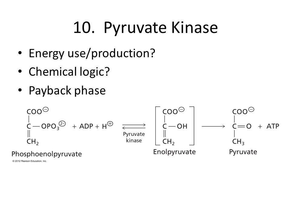 10. Pyruvate Kinase Energy use/production Chemical logic