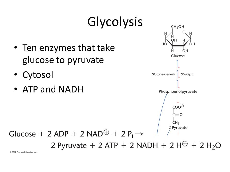 Glycolysis Ten enzymes that take glucose to pyruvate Cytosol