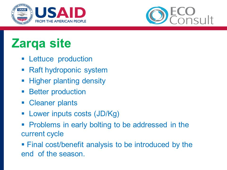 Zarqa site Lettuce production Raft hydroponic system