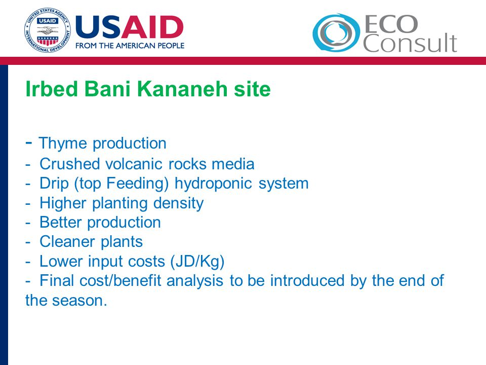 Irbed Bani Kananeh site - Thyme production - Crushed volcanic rocks media - Drip (top Feeding) hydroponic system - Higher planting density - Better production - Cleaner plants - Lower input costs (JD/Kg) - Final cost/benefit analysis to be introduced by the end of the season.