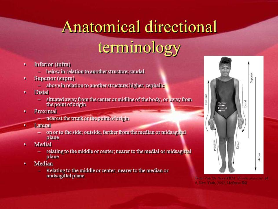 Anatomical directional terminology