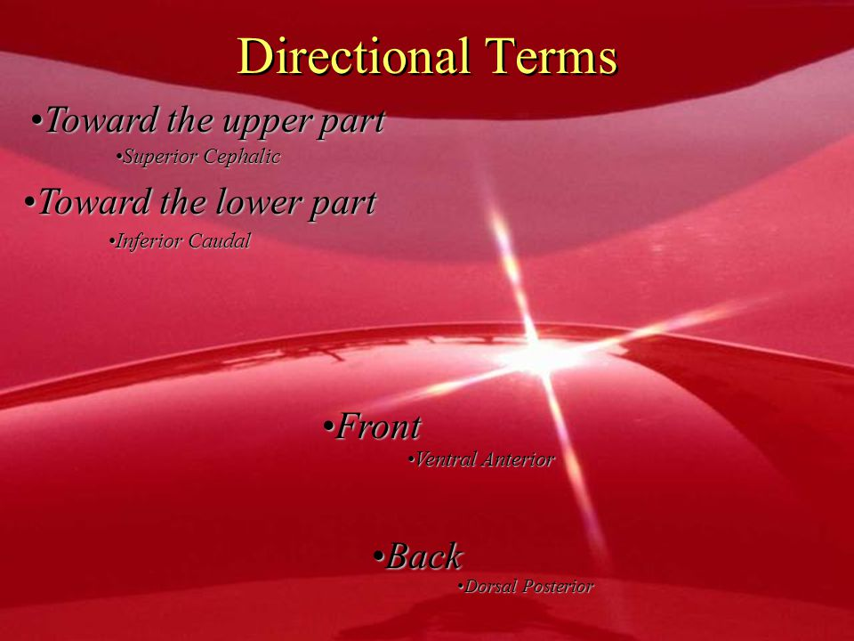 Directional Terms Toward the upper part Toward the lower part Front