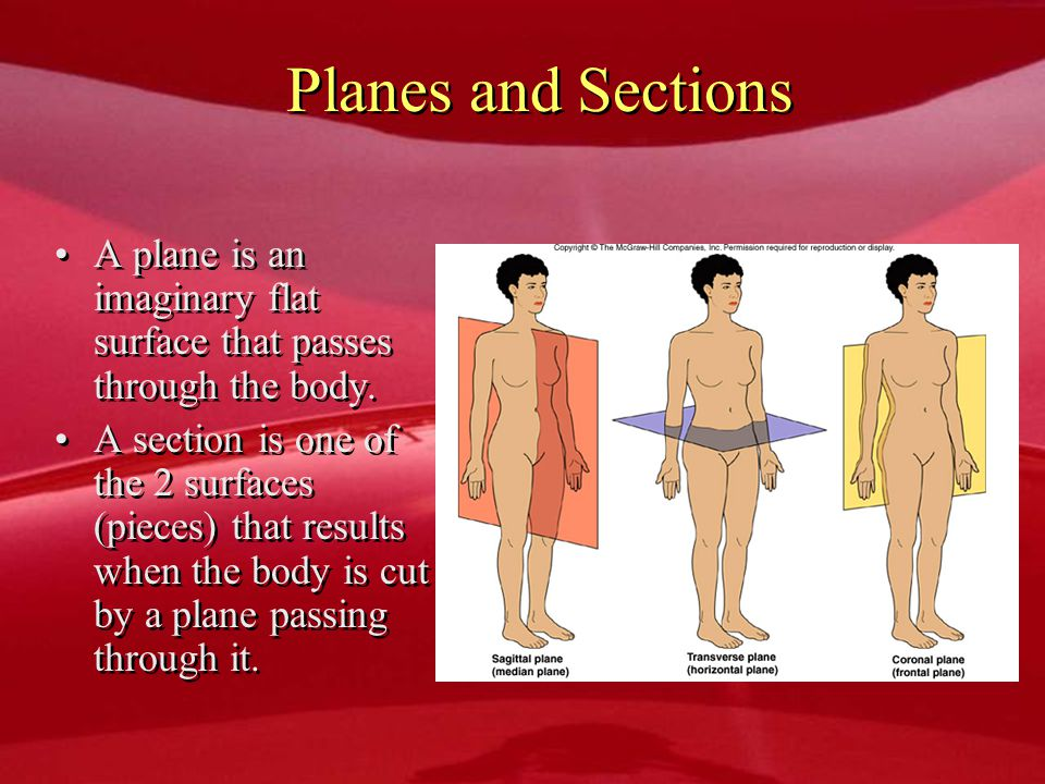Planes and Sections A plane is an imaginary flat surface that passes through the body.