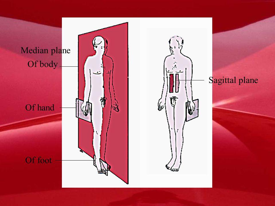 Median plane Of body Sagittal plane Of hand Of foot