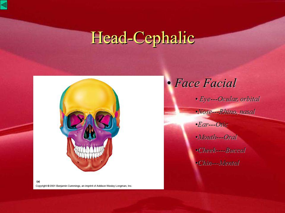 Head-Cephalic Face Facial Eye---Ocular, orbital Nose---Rhino, nasal