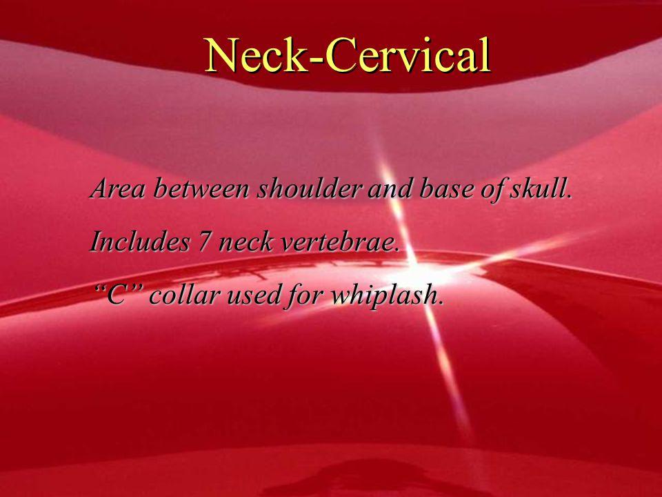 Neck-Cervical Area between shoulder and base of skull.