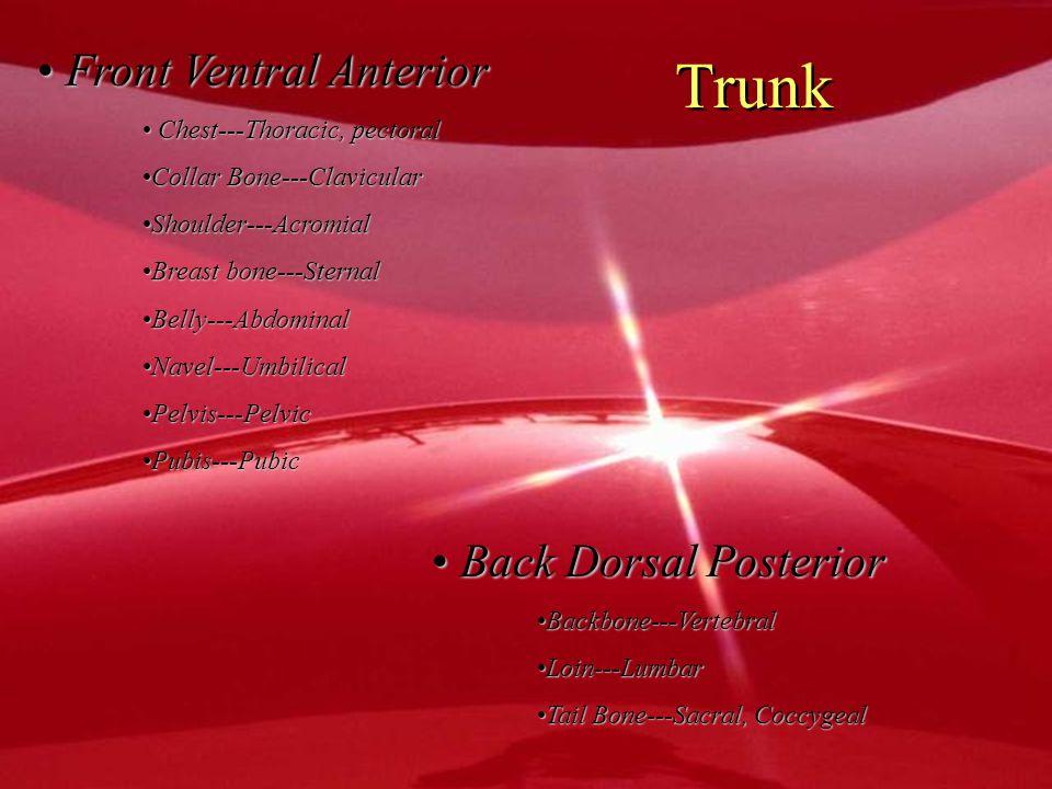 Trunk Front Ventral Anterior Back Dorsal Posterior
